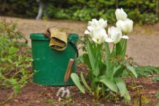 Umgebungspflege / Gartenarbeiten
